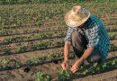 Стартира приемът на проекти за инвестиции в земеделските стопанства