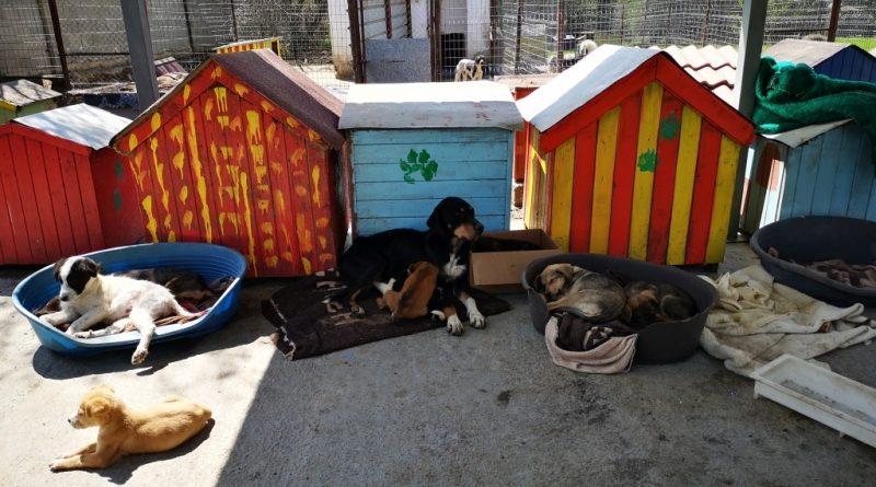 Приключва кампанията за безплатно кастриране на бездомни кучета и котки